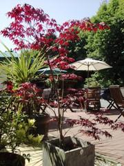 Garden Terrace / Beer Garden