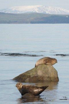 visitorsto Sandhead, Luce Bay